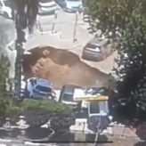 The Week of Parshat Korach, Dramatic Footage of Ground Opening Up in Jerusalem