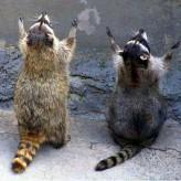 Praying Animals (4 Sweet Photos)