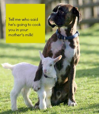 purim goat
