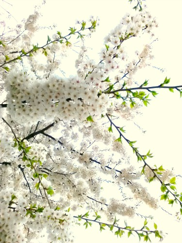 For the arrival of spring and the renewal of life after each cold winter