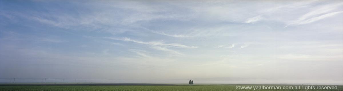 yaal emek-trees