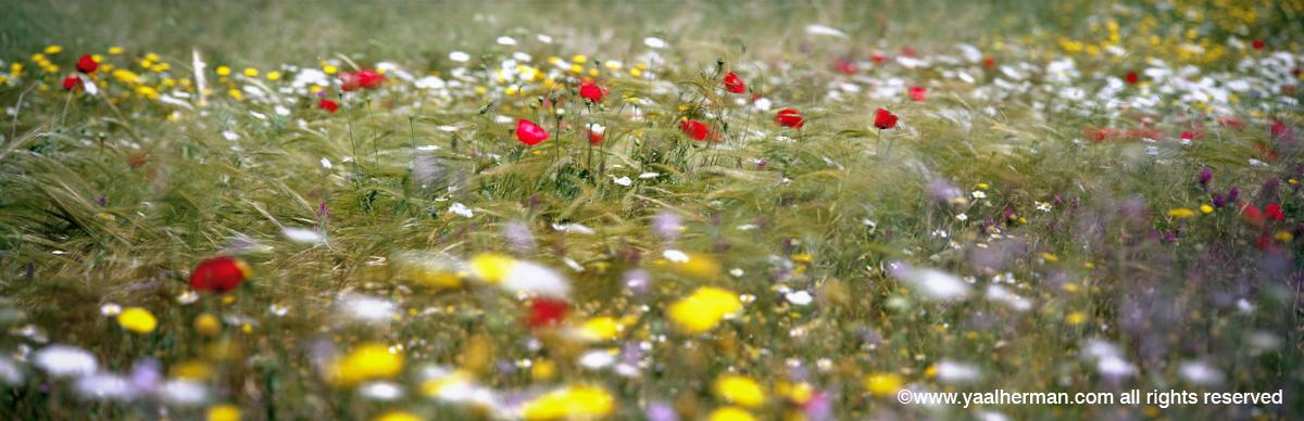 yaal flowers